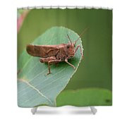 Private Eyes Shower Curtain