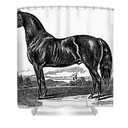 Prize Horse, 1857 Shower Curtain