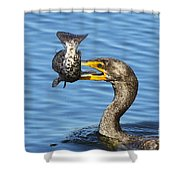 Prized Catch Shower Curtain