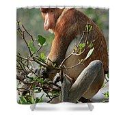 Proboscis Monkey Nasalis Larvatus Male Shower Curtain