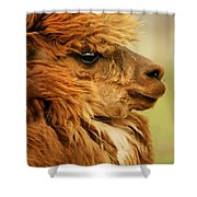Profile Of A Camelid Shower Curtain