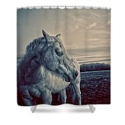 Profile Of A Horse Shower Curtain by Toni Hopper