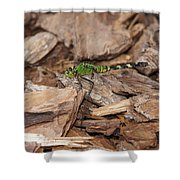 Profile Of Green Dragonfly Shower Curtain