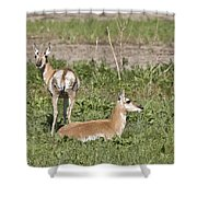 Pronghorn Antelope With Young Shower Curtain