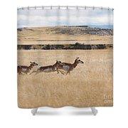 Pronghorn Antelopes On The Run Shower Curtain