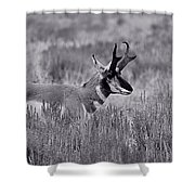 Pronghorn  Shower Curtain
