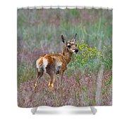 Pronghorn Fawn Shower Curtain