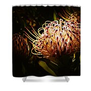Protea Flower 10 Shower Curtain