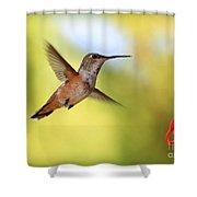 Proud Hummingbird Shower Curtain