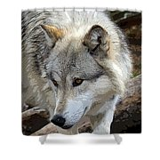 Prowling Wolf  Shower Curtain