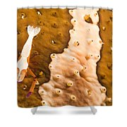 Puerto Galera, Philippines, South East Shower Curtain