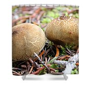 Puffballs Shower Curtain