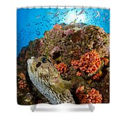 Pufferfish And Reef, La Paz Mexico Shower Curtain