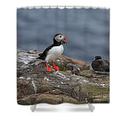 Puffin With Sand Eels Shower Curtain