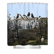 Puffins On A Cliff Edge Shower Curtain