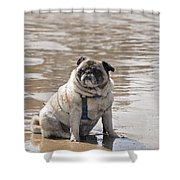 Pug Can't Be Budged Shower Curtain