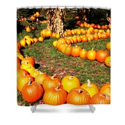 Pumpkin Patch Path Shower Curtain by Carol Groenen