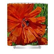 Pumpkin Poppy Shower Curtain