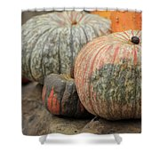 Pumpkins Galore V1 Shower Curtain