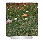 Pumpkins Shower Curtain by Susan Herber