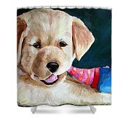 Pup And Toy Shower Curtain
