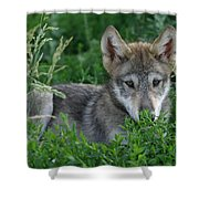Pup In The Grass Shower Curtain