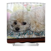 Puppy Dog Eyes Shower Curtain