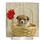 Puppy In A Basket Shower Curtain