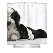 Puppy In Christmas Hat Shower Curtain