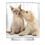 Puppy Licking Cat Shower Curtain