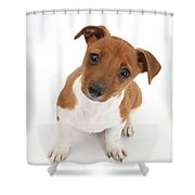 Puppy Looking Up Shower Curtain