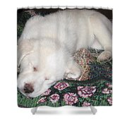 Puppy Nap Shower Curtain