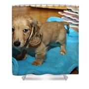 Puppy On Blue Blanket Shower Curtain