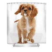 Puppy Trotting Foward Shower Curtain