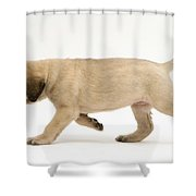 Puppy Trotting Shower Curtain by Jane Burton