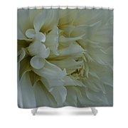Pure Dahlia Shower Curtain