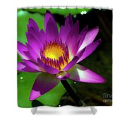 Purple And Gold Three Shower Curtain