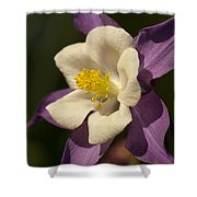 Purple And White Columbine Blossom Facing The Sun - Aquilegia Shower Curtain