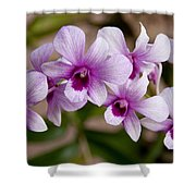 Purple And White Orchids Shower Curtain