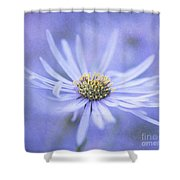 Purple Aster Flower Shower Curtain