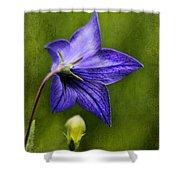 Purple Balloon Flower Shower Curtain