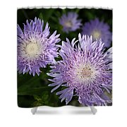 Purple Blossoms Shower Curtain