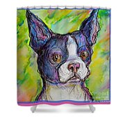 Purple Boston Terrier Shower Curtain