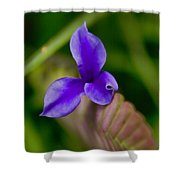 Purple Bromeliad Flower Shower Curtain
