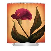 Purple Calla Lily - Square Painting Shower Curtain
