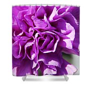 Purple Carnation Shower Curtain