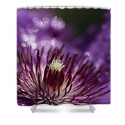 Purple Clematis And Bokeh Shower Curtain