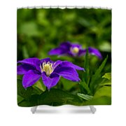 Purple Clematis Flower Shower Curtain