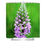 Purple Early Morning Orchid Shower Curtain