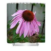 Purple Echinacea Shower Curtain